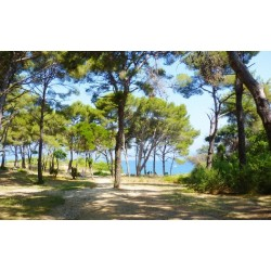 Camping Olbia in Hyeres