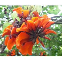 Val Rahmeh Exotic Botanical Garden in Menton
