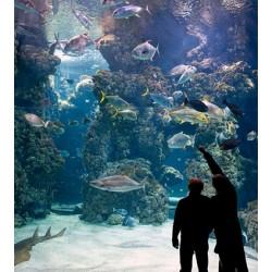 Oceanographic Museum in Monaco