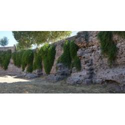 Gates of Gaul Frejus