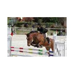 Horseback riding frejus